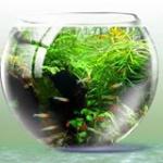Интернет-магазин аквариумов ExoticZoo