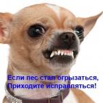 Зоопсихолог - дрессировка собак с проблемным поведением