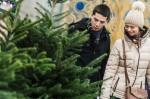 Стала известна стоимость новогодних ёлок для киевлян