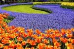 На Певческом поле готовится к открытию выставка тюльпанов