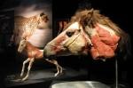 На ВДНХ покажут настоящие тела животных-гигантов