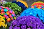 Пряничный дом и зефирная крепость: на Певческом поле пройдет «сладкая» выставка хризантем