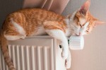 Отопление появилось уже в половине жилых домов столицы: Кличко
