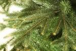 Киевские пункты приема новогодних ёлок будут работать до 1 февраля