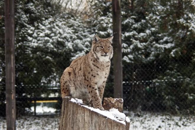 Киевский зоопарк снизил цены на входные билеты на время локдауна