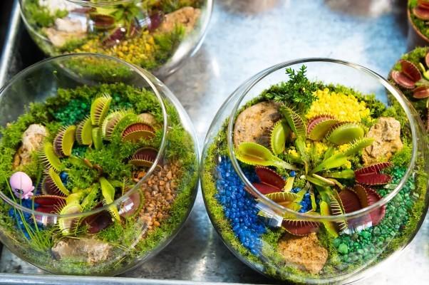 В столице ко Дню всех влюбленных открылась ярмарка экзотических растений