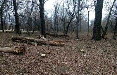 В парке «Дружбы народов» вырубили более 300 деревьев