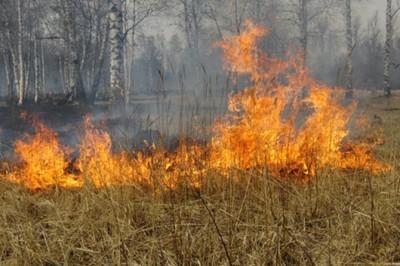 Травяные пожары под Киевом: в чем опасность