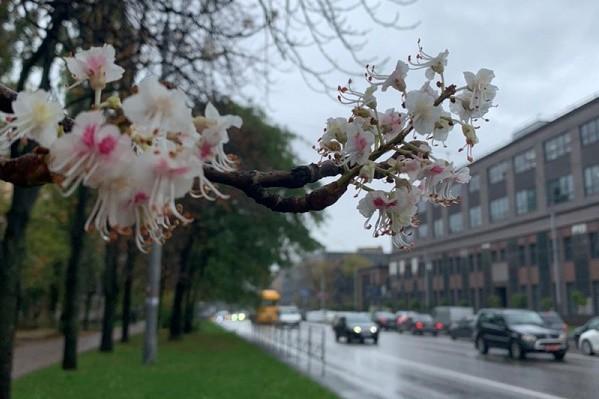 Новый температурный рекорд: в Киеве продолжается метеорологическое лето