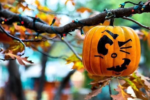 Деревья-призраки: киевлян зовут на Хэллоуин в Ботанический сад