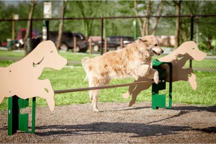 В Днепровском районе обустроили новую площадку для выгула собак