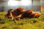 В Доме природы пройдет выставка африканских улиток