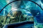 В центре Киева откроют подземный океанариум