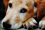 В Киеве планируют построить Центр защиты животных