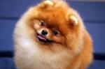В Киеве пройдут выставки собак
