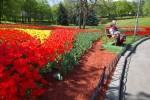 К Пасхе на Певчем поле откроют фестиваль тюльпанов