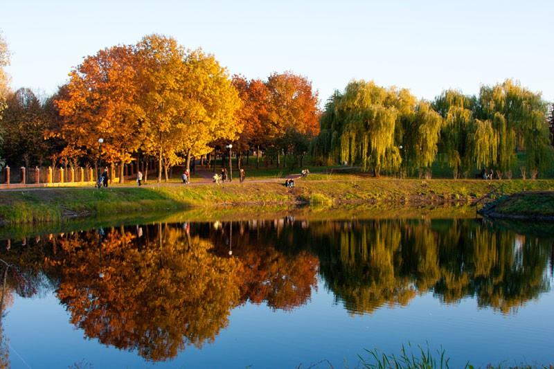 В Голосеевском парке высадили дубы и калину