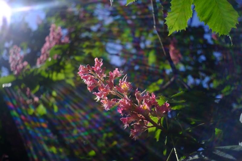 Киевляне выбрали деревья для высадки на Крещатике