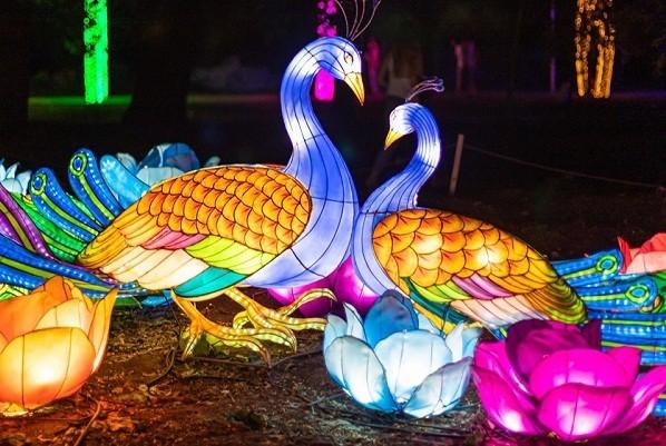 На Певческом поле откроется новогодний фестиваль китайских фонарей