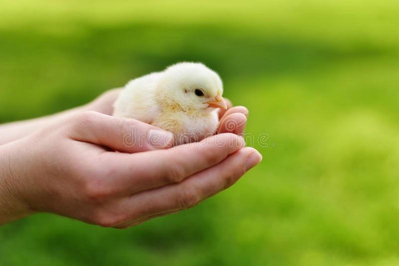 ТМ «Гавриловские курчата» начнёт перерабатывать отходы в энергию