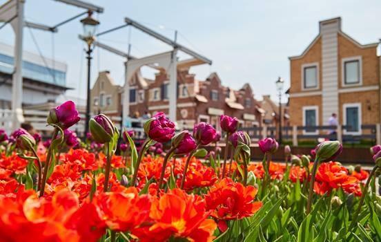 В аутлет-городке «Мануфактура» устроят «Голландскую весну»