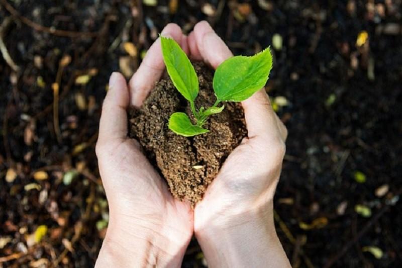 Посади свое дерево: киевлянам предлагают озеленить столицу