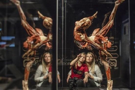 Киевлян приглашают на всемирно известную выставку человеческих тел