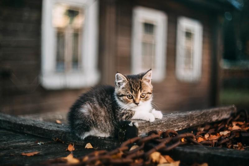 По всему Киеву разместят домики для бездомных кошек