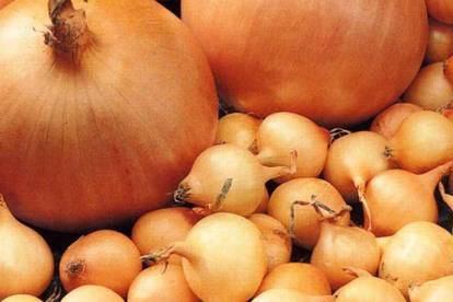 Лук-севок и чеснок. Достоинства продукции и правила выращивания