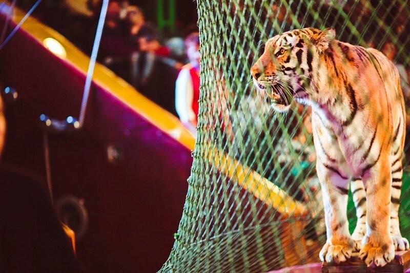 В столице запретили использовать животных в передвижных цирках
