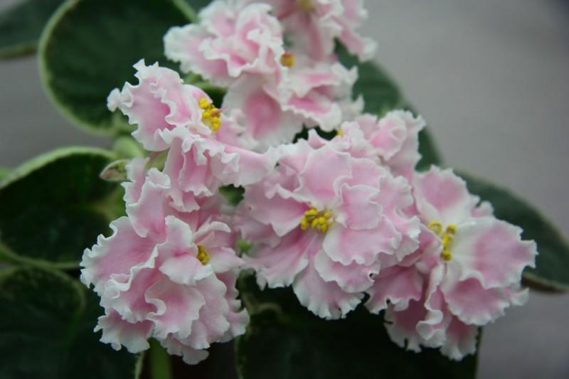 В Доме природы пройдет выставка цветов