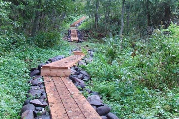 В Голосеевском парке открыли новую интерактивную эко-тропу