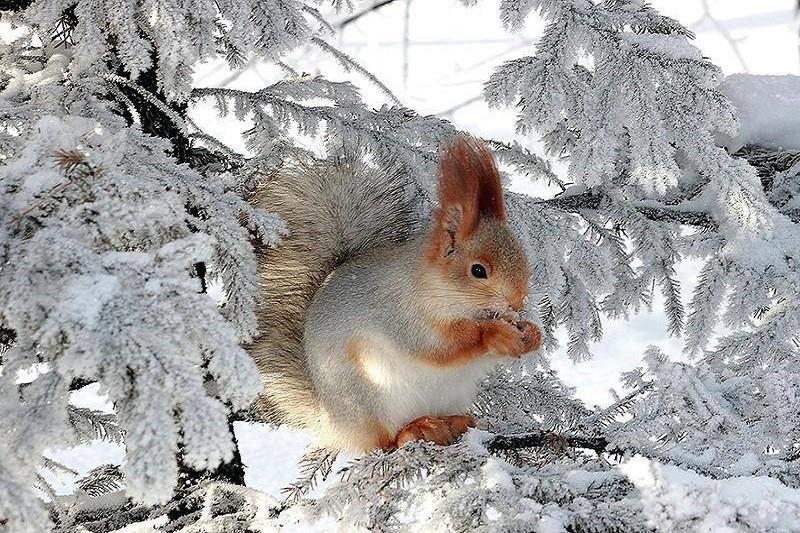 Зима близко: популярные киевские места меняют график работы