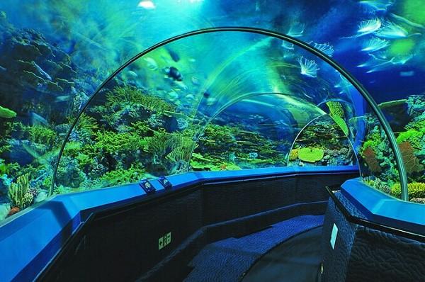 В конце 2021 года: стало известно, когда в Киевском зоопарке откроют океанариум