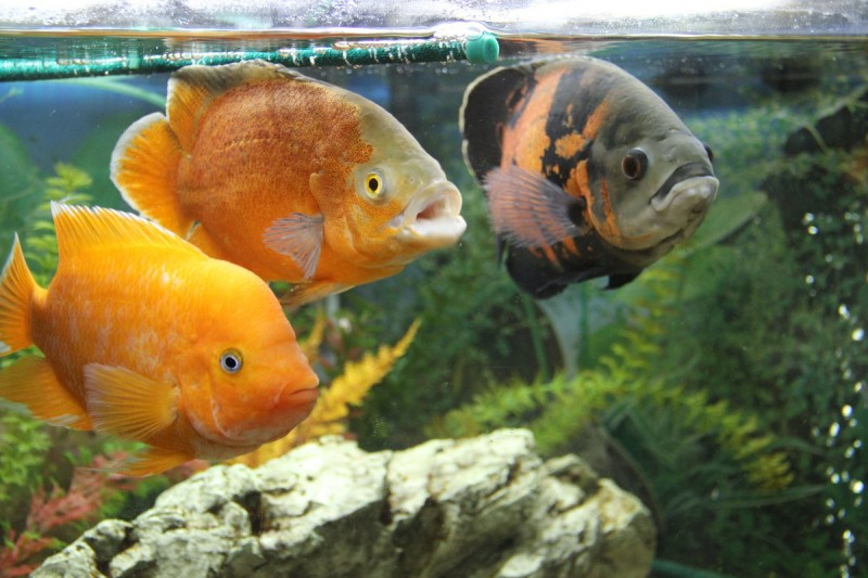 В киевском Доме природы заработал аквариум