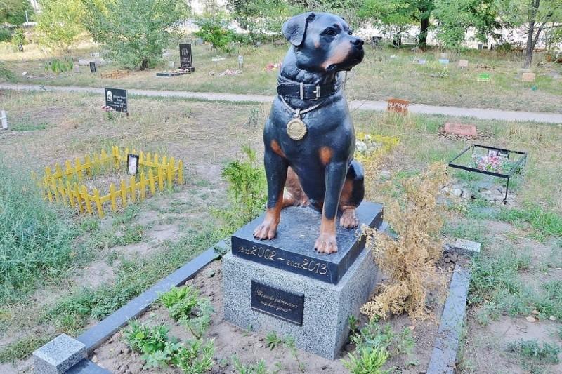 В Киеве создадут кладбище домашних животных