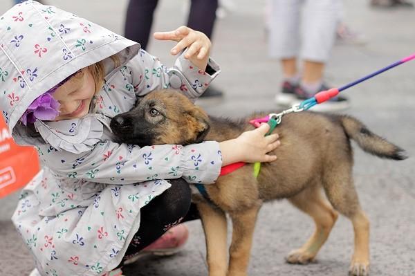 Киевлян приглашают на первый масштабный фестиваль с дрессированными собаками