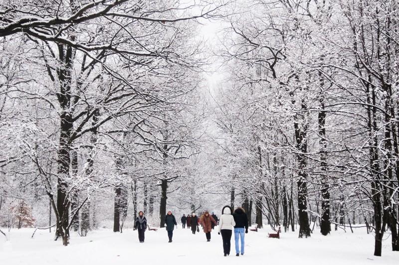 В Ботаническом саду Киева создадут тактильный сад для людей с ограниченными возможностями
