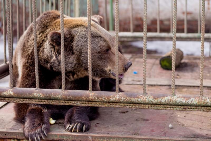 Отказ от клеток: киевский зоопарк превратят в открытое пространство