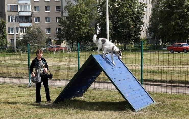 Киевляне просят обустроить площадки для выгула собак
